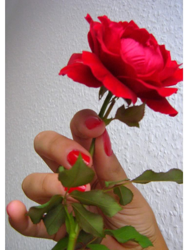 love rose flower - Page 2 Love4