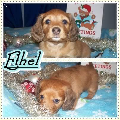 """Ethel"" - Red Dapple - Female E5"