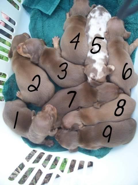Need help! Puppiesall