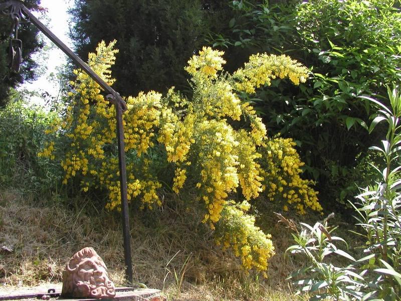 io adoro i fiori e gli alberi 03052008990