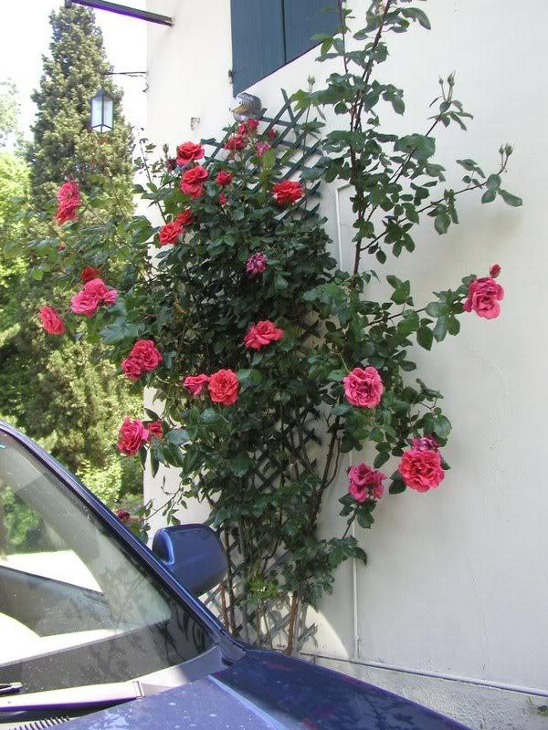 io adoro i fiori e gli alberi P5104070
