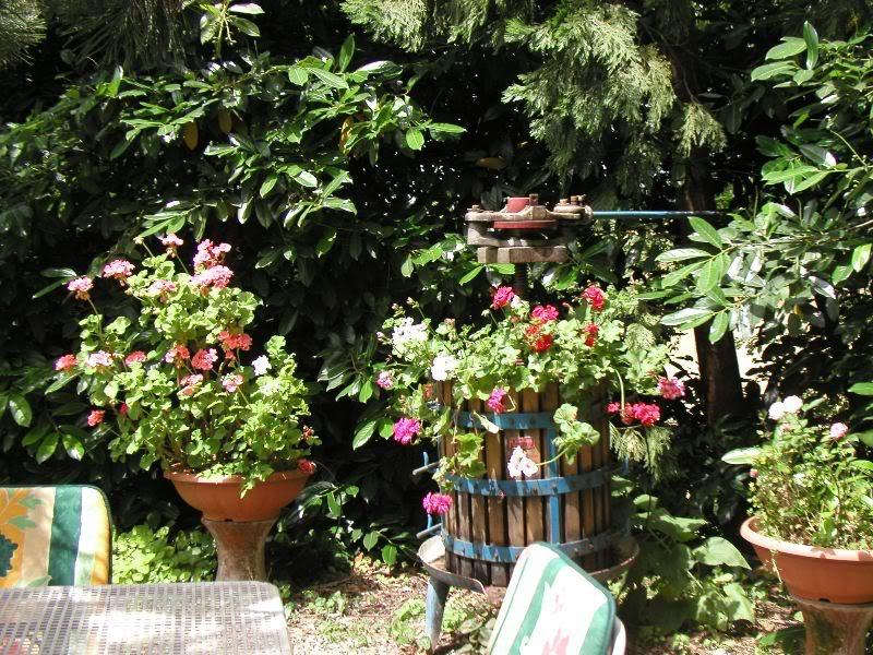 io adoro i fiori e gli alberi P6014156