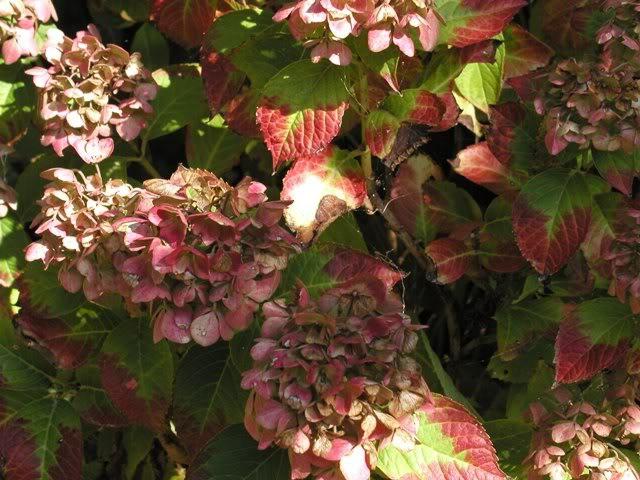 io adoro i fiori e gli alberi P9284664