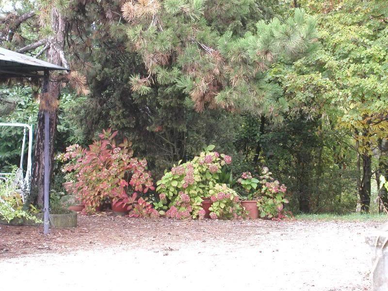 io adoro i fiori e gli alberi PA272752