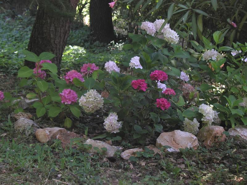 io adoro i fiori e gli alberi Aiuola