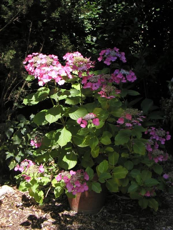 io adoro i fiori e gli alberi Geoggreychudbund