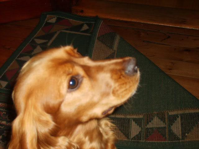 Que clase de perros te gustan a tí? S5001603