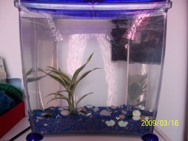 Aquariums à thèmes ~ Postez vos photos ~ - Page 4 101_4451