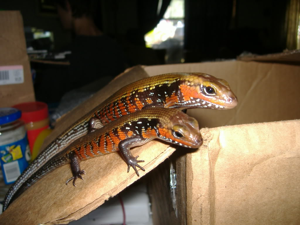 Warez's almighty picture thread of awesomess Fireskinks2