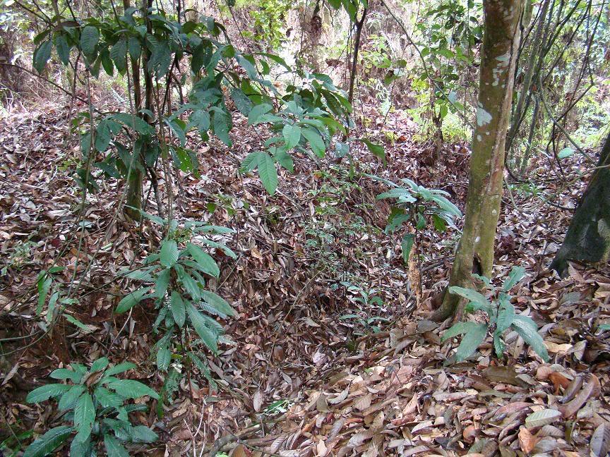 Battle Of Kampar (Green Ridge Battle Site), Kampar, Perak. Gr11