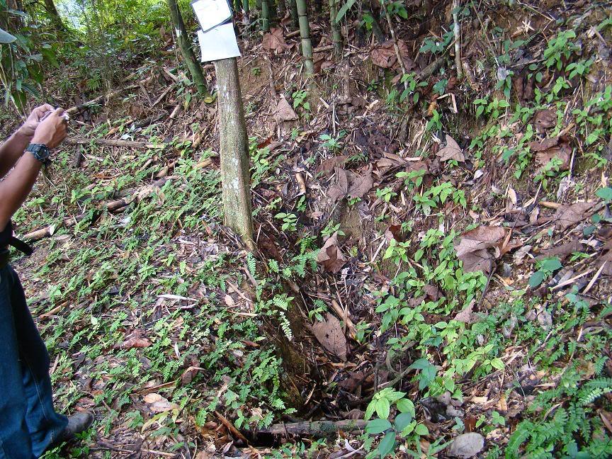 Battle Of Kampar (Green Ridge Battle Site), Kampar, Perak. Gr6