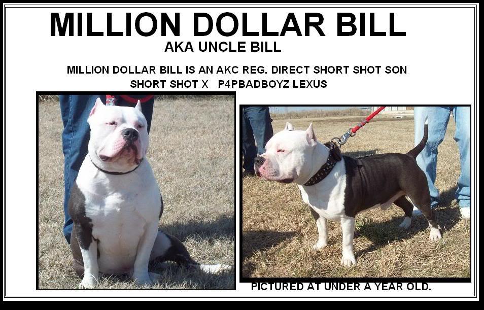 MILLION DOLLAR BILL DIRECT SHORT SHOT SON, WHAT YOU THINK FAM? AKCDIRECTSHORTSHOTSONMILLIONDOLLARB