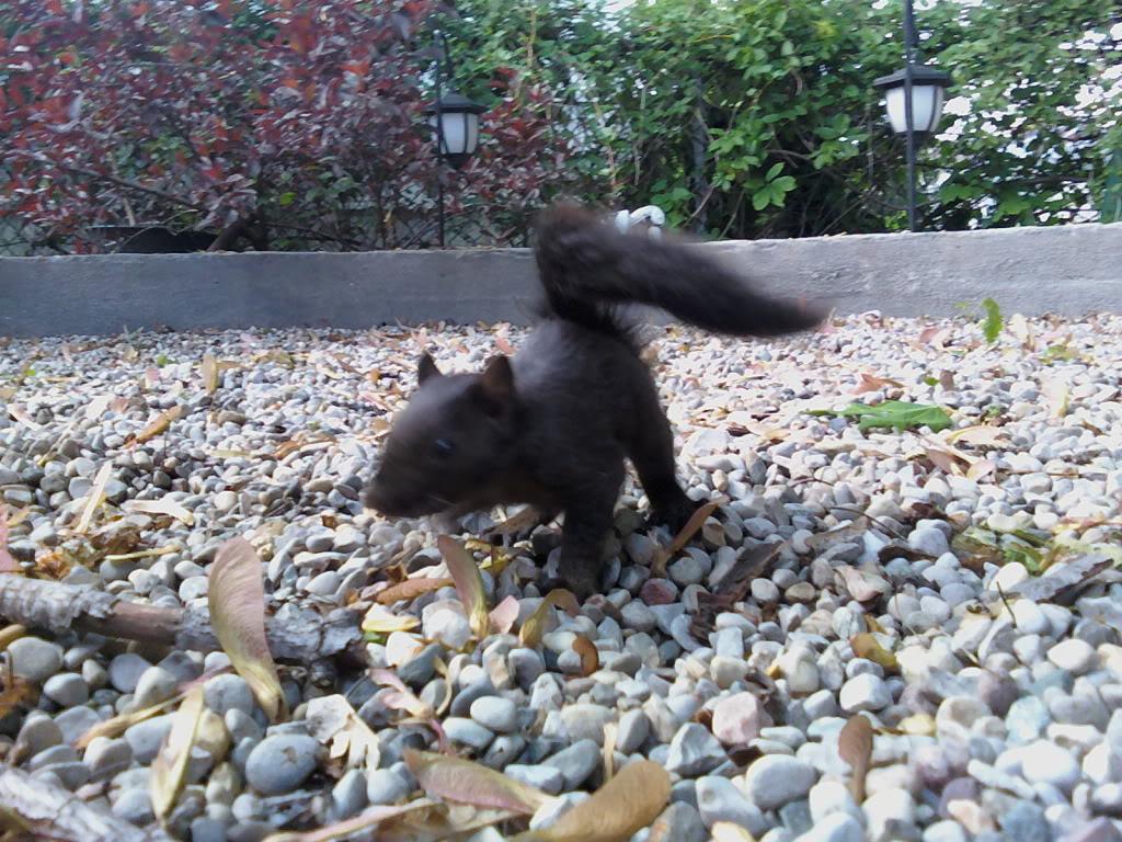 Beskar'gam Project! MKI (photo heavy) Babysquirrel