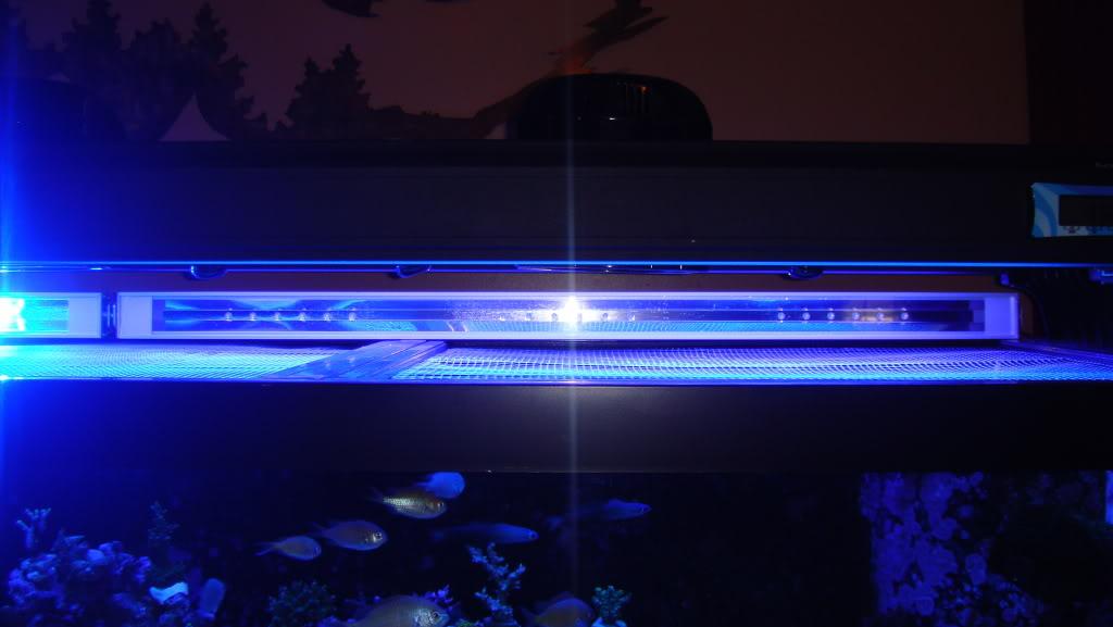 180 gallon Reef build. 003-31