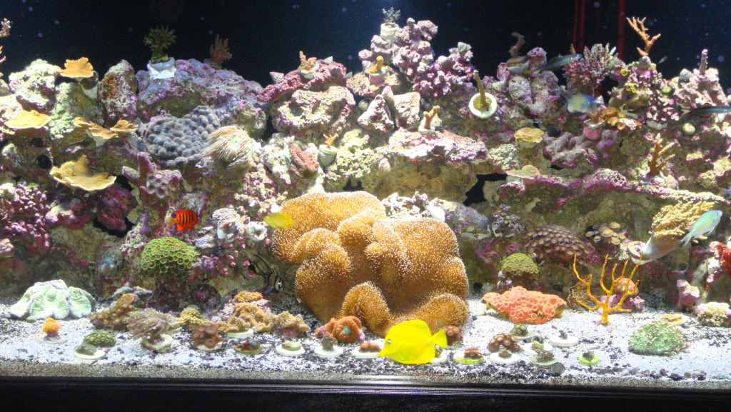 180 gallon Reef build. 008-14