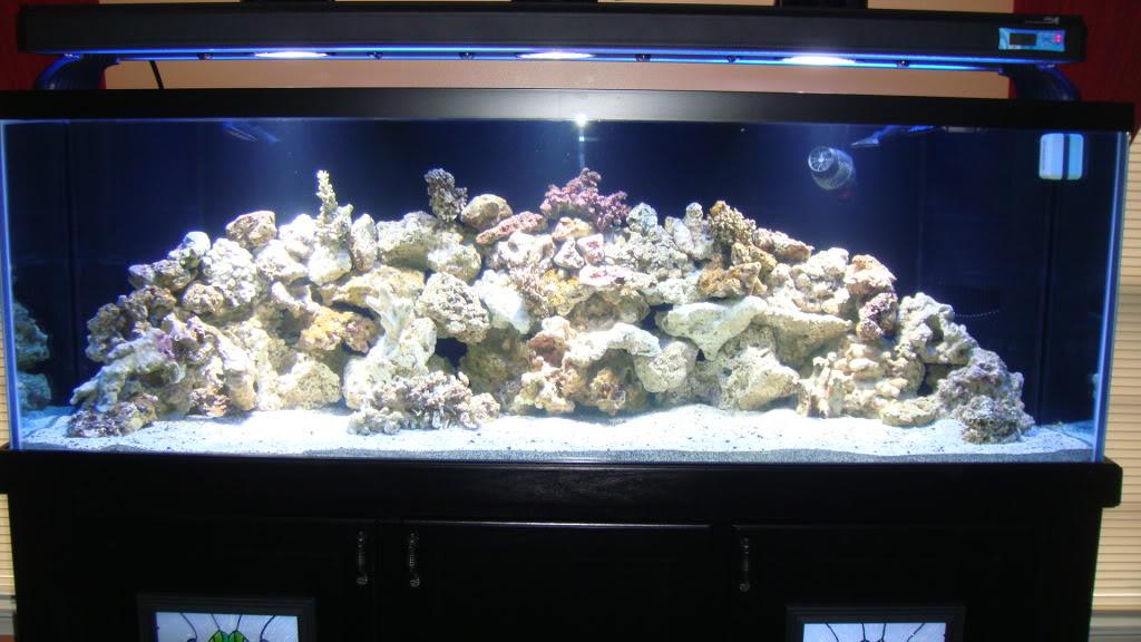 180 gallon Reef build. 009-12180