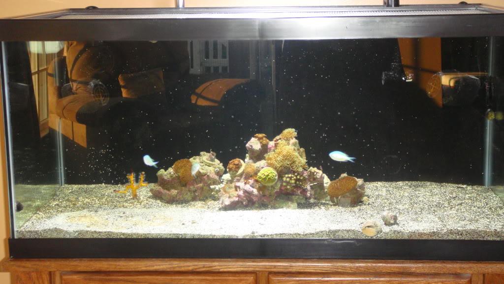 180 gallon Reef build. 010-14