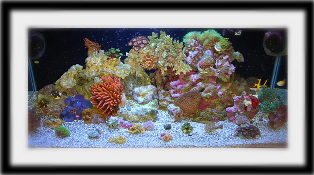 180 gallon Reef build. 013-18-1-1