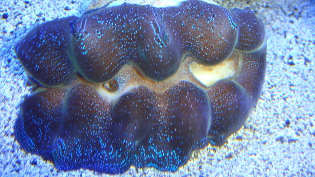 180 gallon Reef build. 013-20