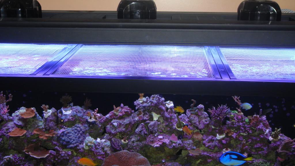 180 gallon Reef build. 015-13