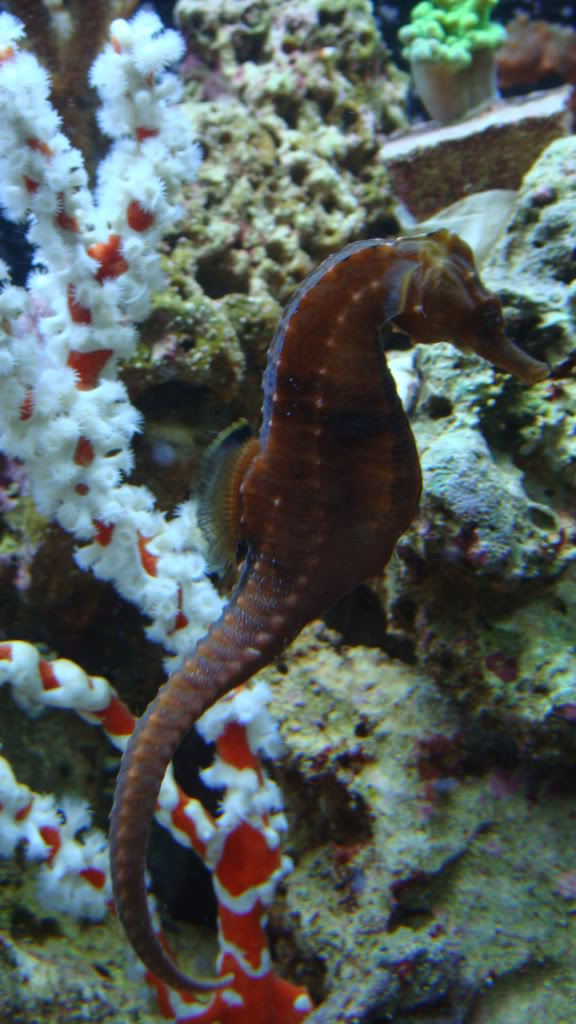My Sea Horse adventure:) - Page 5 027-14