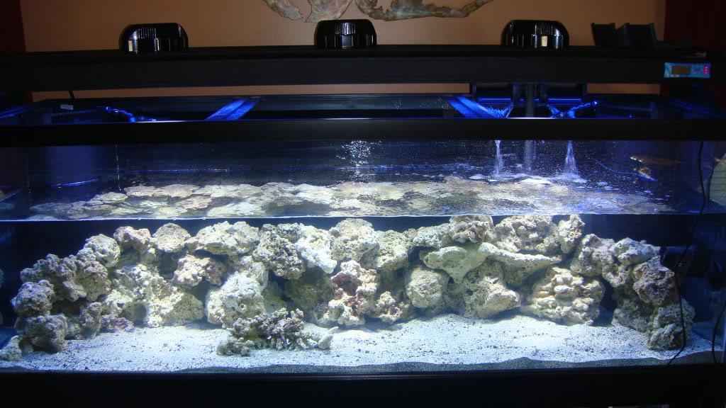 180 gallon Reef build. 027-5180