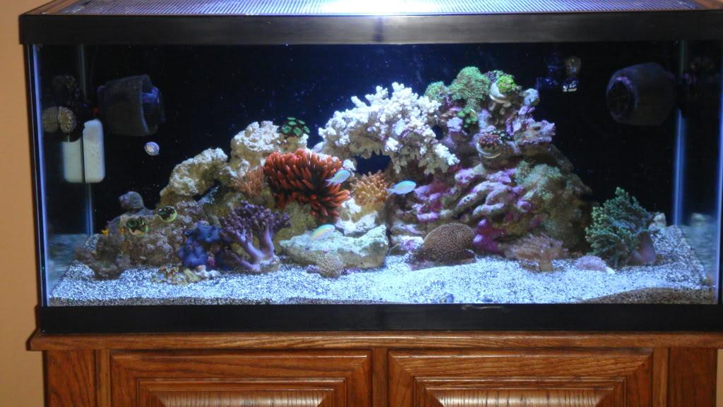 180 gallon Reef build. 027-8