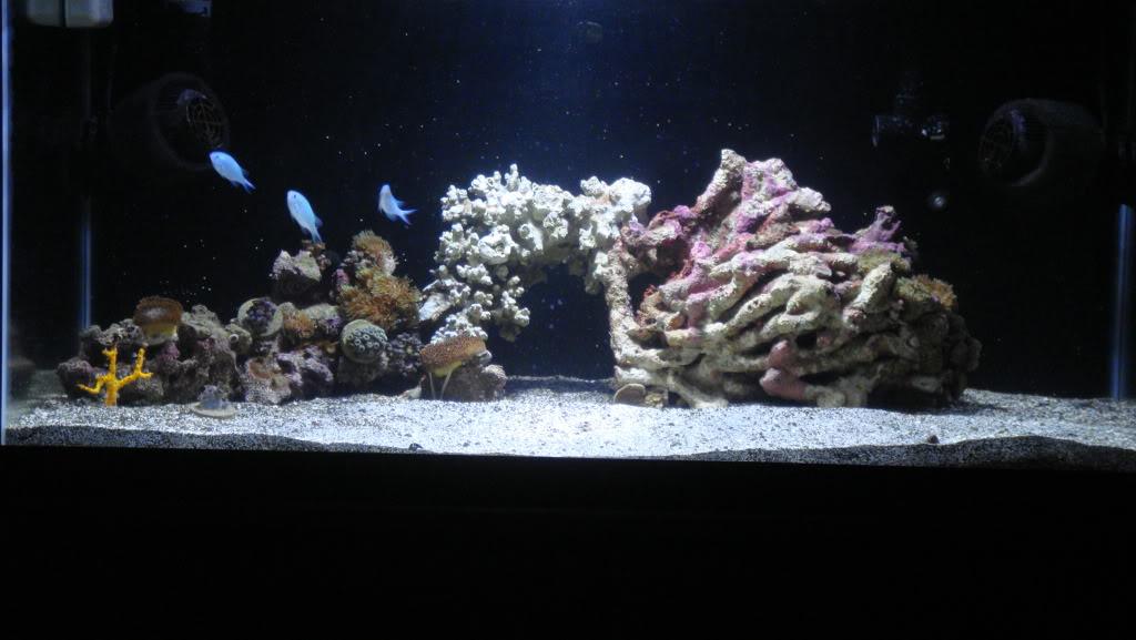 180 gallon Reef build. 037-9