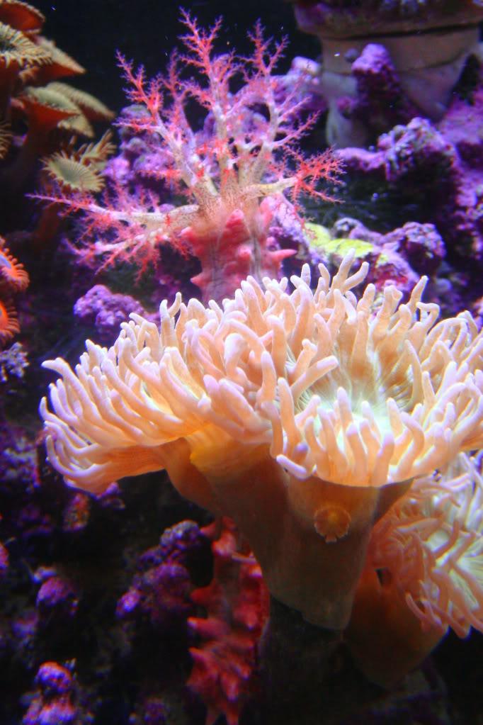 Sea slug 039-3