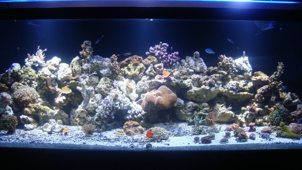 180 gallon Reef build. 043-6180
