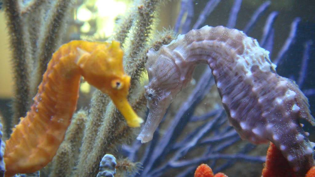 My Sea Horse adventure:) - Page 5 123-1
