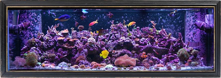 180 gallon Reef build. DSC_0053-2