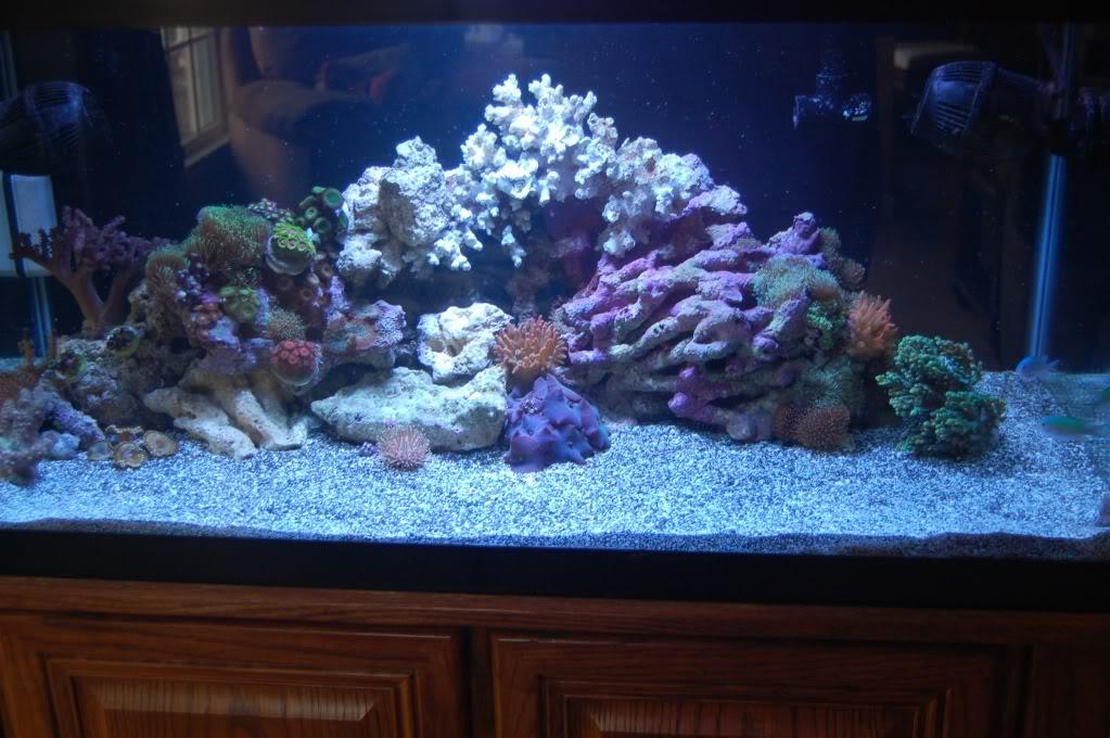 180 gallon Reef build. DSC_0063