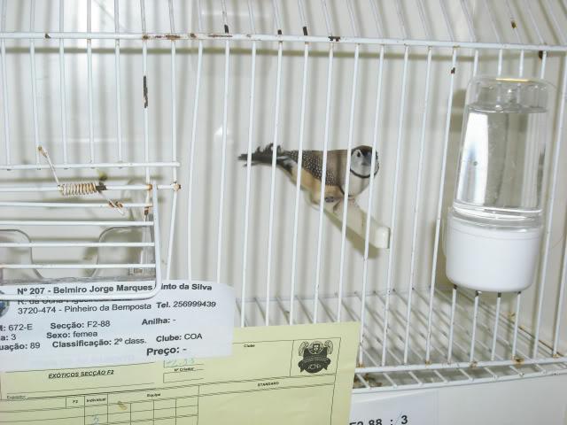 Fotos 17ªExpoave Clube Ornitológico do Antuã COA001