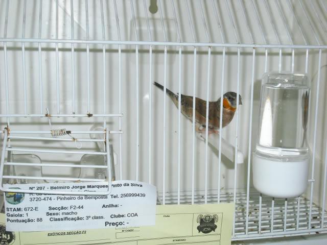 Fotos 17ªExpoave Clube Ornitológico do Antuã COA011
