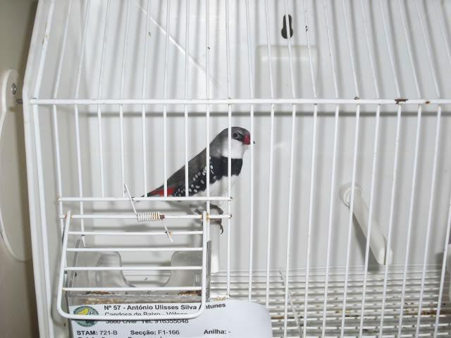 Fotos 17ªExpoave Clube Ornitológico do Antuã COA017
