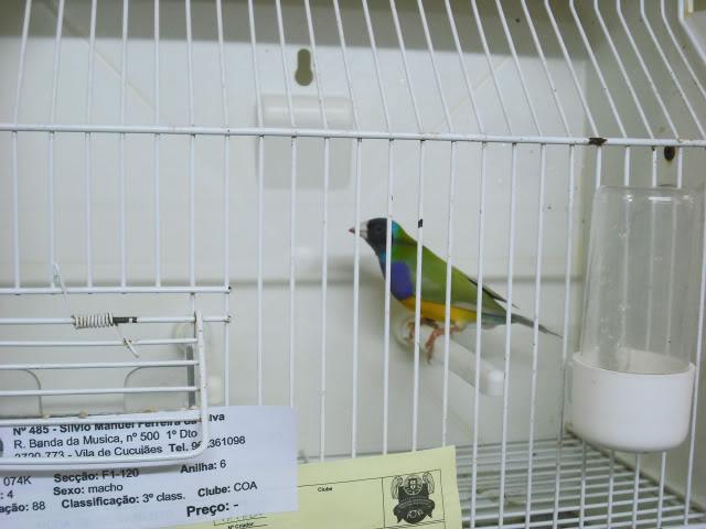 Fotos 17ªExpoave Clube Ornitológico do Antuã COA036