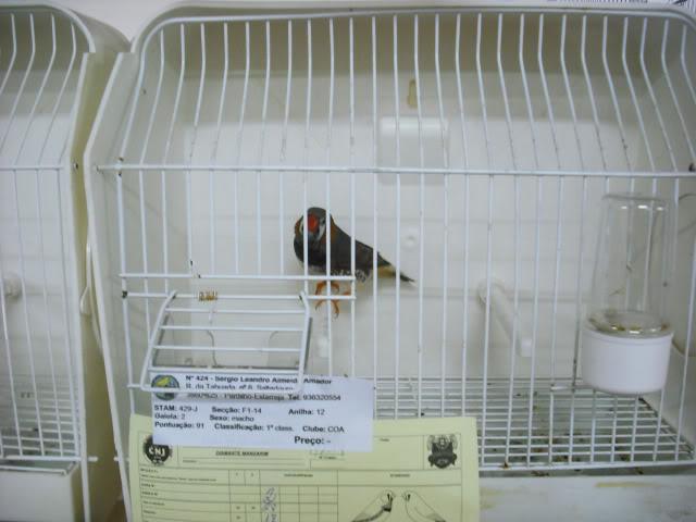 Fotos 17ªExpoave Clube Ornitológico do Antuã COA068