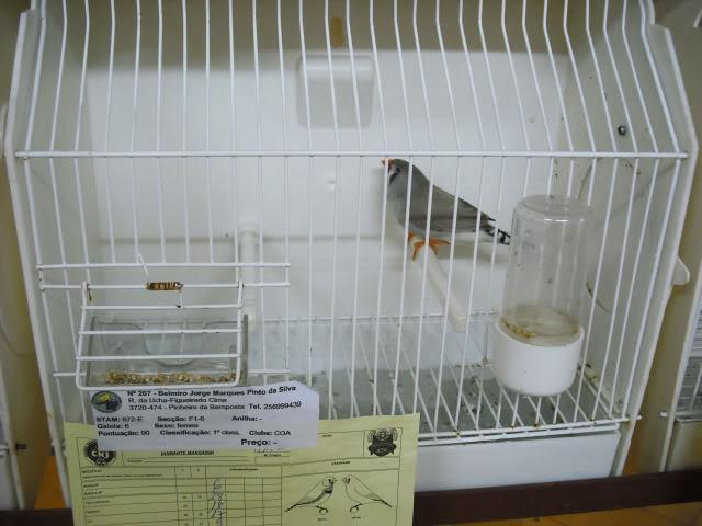Fotos 17ªExpoave Clube Ornitológico do Antuã COA074