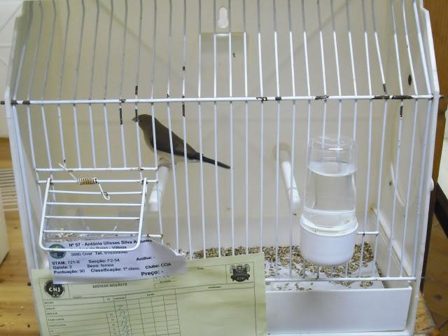 Fotos 17ªExpoave Clube Ornitológico do Antuã COA083