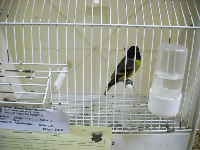 Fotos 17ªExpoave Clube Ornitológico do Antuã COA084