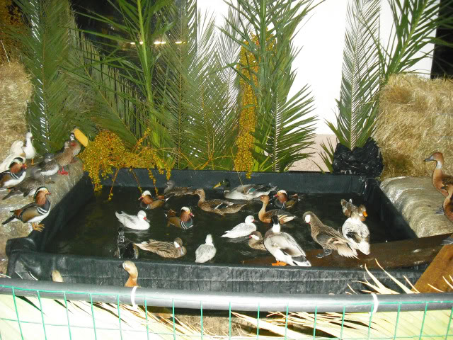 Fotos 17ªExpoave Clube Ornitológico do Antuã COA095