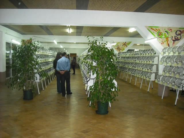 Fotos 17ªExpoave Clube Ornitológico do Antuã COA097