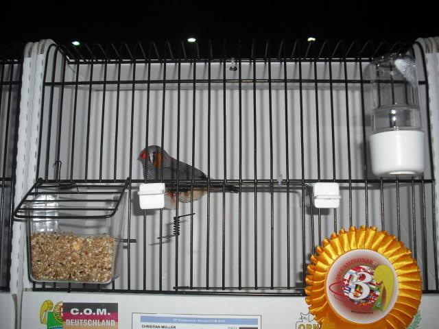 Diário do 58º Campeonato Mundial de Ornitologia Matosinhos 2010 DSCF3872