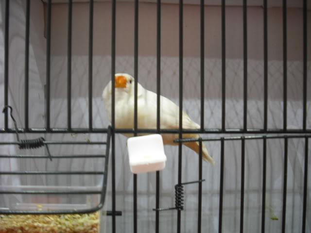 Diário do 58º Campeonato Mundial de Ornitologia Matosinhos 2010 DSCF3887
