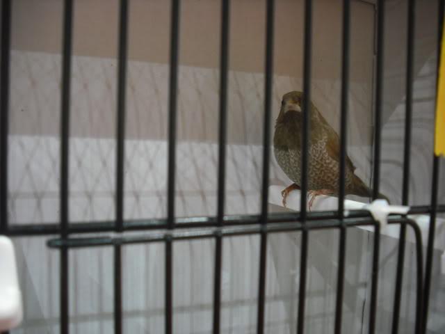 Diário do 58º Campeonato Mundial de Ornitologia Matosinhos 2010 DSCF3894