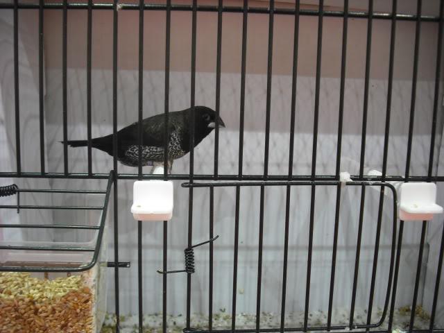 Diário do 58º Campeonato Mundial de Ornitologia Matosinhos 2010 DSCF3896