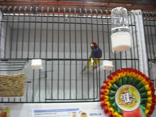 Diário do 58º Campeonato Mundial de Ornitologia Matosinhos 2010 DSCF3915