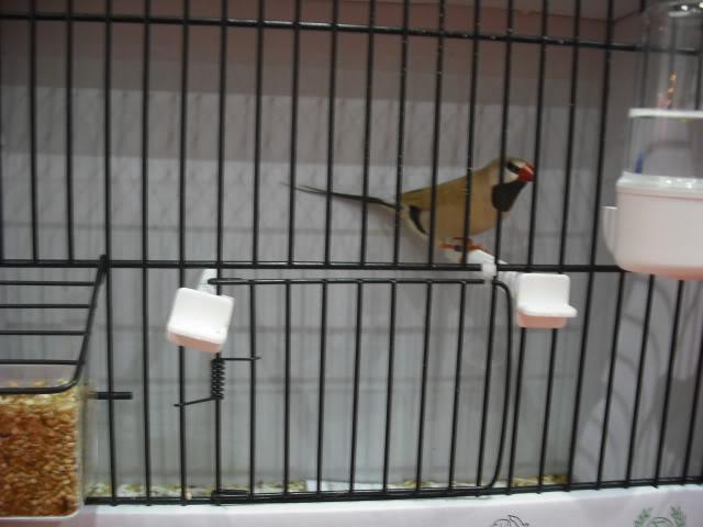 Diário do 58º Campeonato Mundial de Ornitologia Matosinhos 2010 DSCF3922