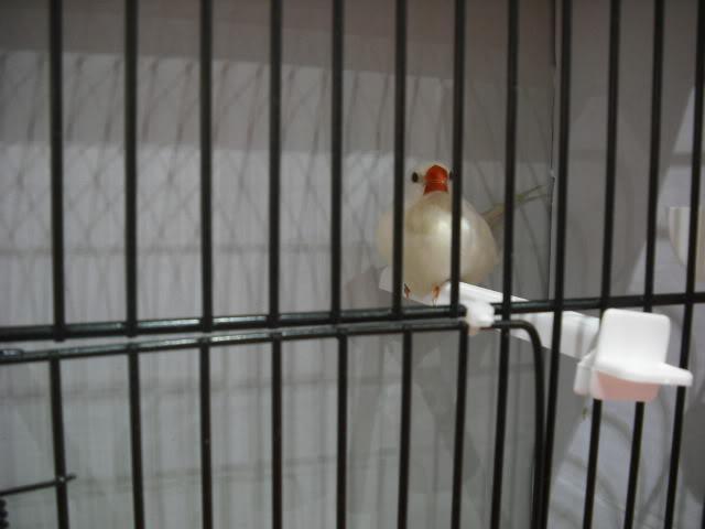 Diário do 58º Campeonato Mundial de Ornitologia Matosinhos 2010 DSCF3924